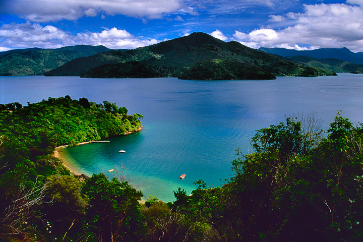 New Zealand Gallery: Photo Gallery/New Zealand/Southland/Queen Charlotte Drive 1
